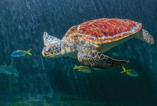 Naturaleza Cinema Planeta cortometraje largometraje películas cine online animales naturaleza medio ambiente